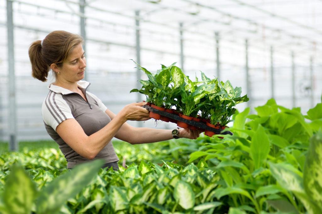 Glastuinbouw voor een gezonde toekomst op Californië.